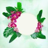 美丽的兰花开花与在一个自由场装饰的热带叶子 免版税库存照片