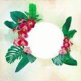 美丽的兰花开花与在一个自由场装饰的热带叶子 库存图片