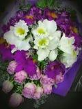 美丽的兰花开花花束 库存照片