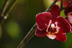 美丽的兰花花在热带庭院里增长有自然本底,墙纸自然特写镜头宏指令,明信片秀丽和 免版税库存图片