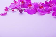 美丽的兰花花 库存图片