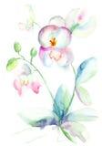 美丽的兰花,水彩例证 免版税库存图片
