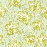 美丽的兰花 在浅兰的背景橄榄绿桃红色白色等高剪影无缝的样式,卡片横幅desi的手拉的集合 免版税库存图片