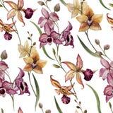 美丽的兰花flower8 库存图片