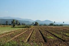 美丽的农场土地 免版税库存图片