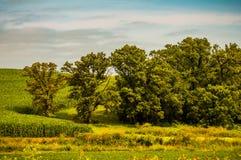 美丽的农村衣阿华的一个惊人的风景 库存照片