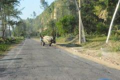 美丽的农村路 库存照片