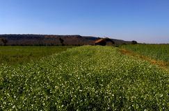 美丽的农田和风景, samarda,博帕尔,印度 免版税库存图片