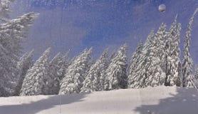 美丽的冬天摘要云杉斯诺伊 免版税库存图片