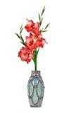 美丽的剑兰红色花瓶 图库摄影