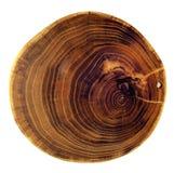 美丽的剪切结构树 免版税库存照片