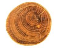 美丽的剪切结构树 免版税库存图片