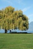 美丽的加拿大海岸温哥华 免版税图库摄影
