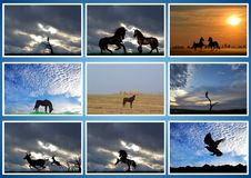 美丽的动物 马,老鹰, filin,鹿 拼贴画 免版税库存照片