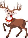 美丽的动画片驯鹿rudolf 库存照片