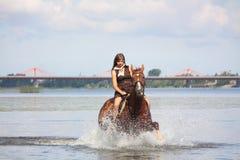 美丽的十几岁的女孩骑乘马在河 免版税库存照片