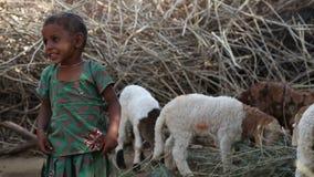 美丽的印地安女孩支持的绵羊画象在后院 股票视频