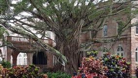 美丽的印度榕树 免版税库存图片