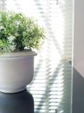 美丽的叶子和白色花瓶有树荫和阴影的点燃 库存图片