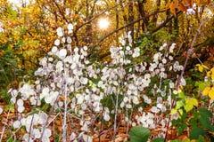 美丽的叶子在一个被迷惑的森林里 免版税库存图片