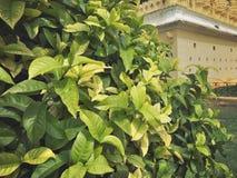 美丽的叶子形成庭院 库存照片