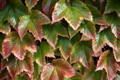 美丽的叶子秋天背景  免版税库存照片