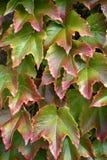 美丽的叶子秋天背景  库存照片