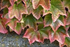 美丽的叶子秋天背景  免版税库存图片
