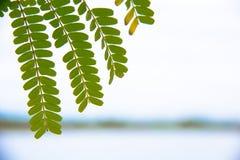 美丽的叶子 库存照片