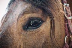 美丽的哀伤的马眼睛 库存照片