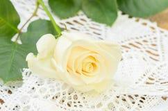 美丽的唯一白色玫瑰 免版税库存照片