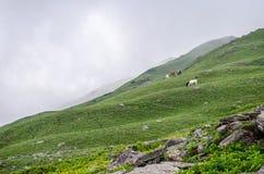 美丽的喜马偕尔省 免版税图库摄影