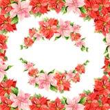 美丽的在白色背景的水彩桃红色和红色木槿 库存例证
