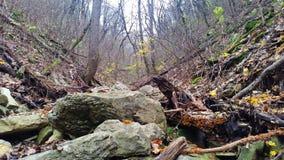 美丽的在石头中的秋天森林下落的树 自然土地 库存图片