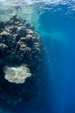 美丽的在礁石附近的城市珊瑚dahab埃及 免版税图库摄影