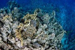 美丽的在礁石附近的城市珊瑚dahab埃及 库存图片