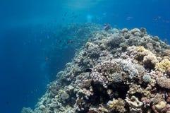 美丽的在礁石附近的城市珊瑚dahab埃及 免版税库存照片