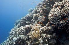 美丽的在礁石附近的城市珊瑚dahab埃及 免版税库存图片