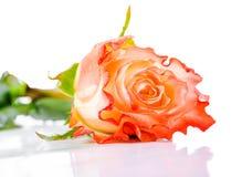 美丽的在轻的背景的桔子玫瑰色花与下落,克洛 库存照片