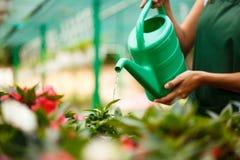 年轻美丽的在blury室外背景的卖花人浇灌的花 免版税库存照片