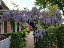 美丽的垂悬的紫色花在德国庭院欧洲里 免版税库存照片
