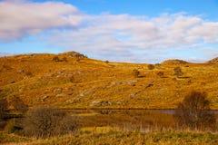 美丽的域前景横向挪威草莓 图库摄影
