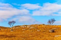 美丽的域前景横向挪威草莓 免版税图库摄影