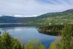 美丽的域前景横向挪威草莓 免版税库存图片