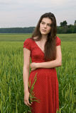 美丽的域女孩绿色麦子 库存照片