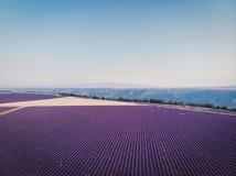 美丽的培养的淡紫色领域和山鸟瞰图在普罗旺斯 库存照片