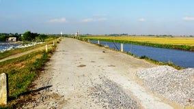 美丽的堤路用金黄阳光盖 库存照片