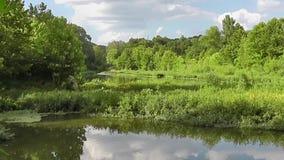 美丽的夏天小河风景w昆虫 股票视频