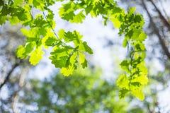 美丽的夏天树 库存图片