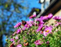 美丽的夏天照片植物太阳花春天蝴蝶 免版税图库摄影
